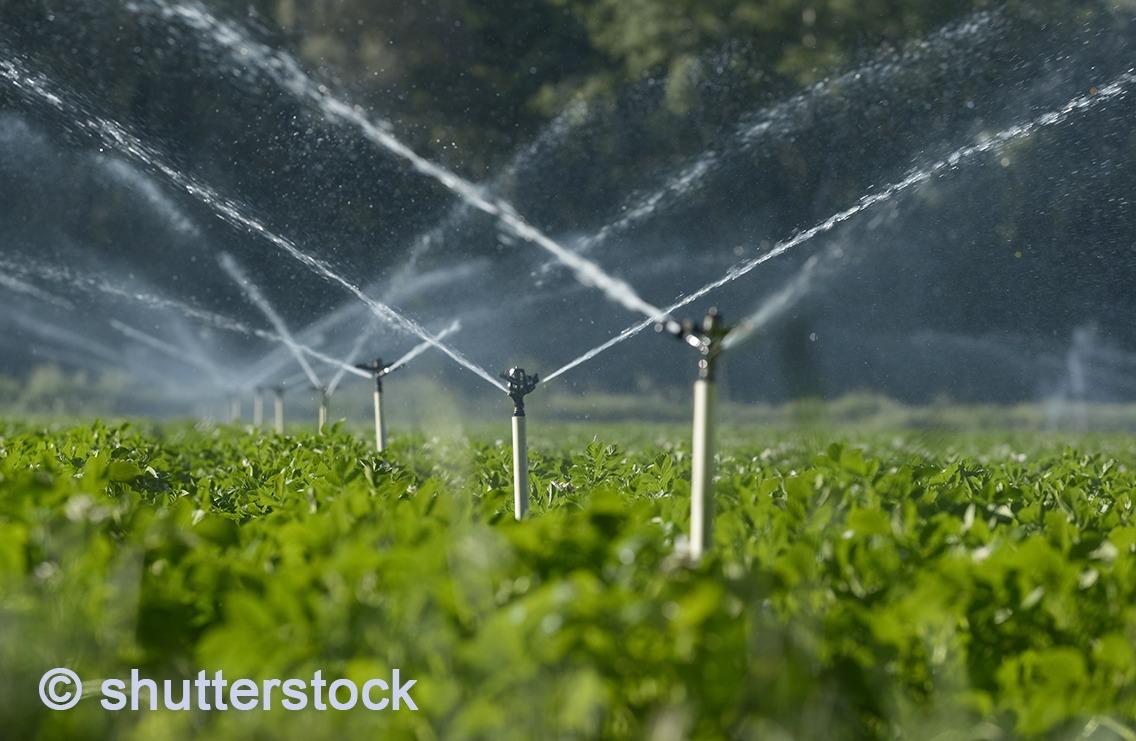 Bild Bewässerung